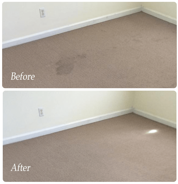 Affordable Carpet Cleaning Services In Perth WA